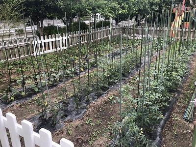 畑のお野菜♪