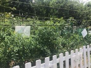野菜が豊作!収穫しました☆(動画)